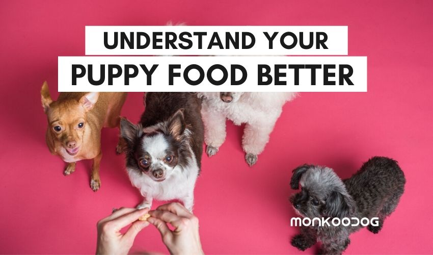 Understanding Dog Food Better - The Choice of the Right Food for Adult Dogs vs Puppies