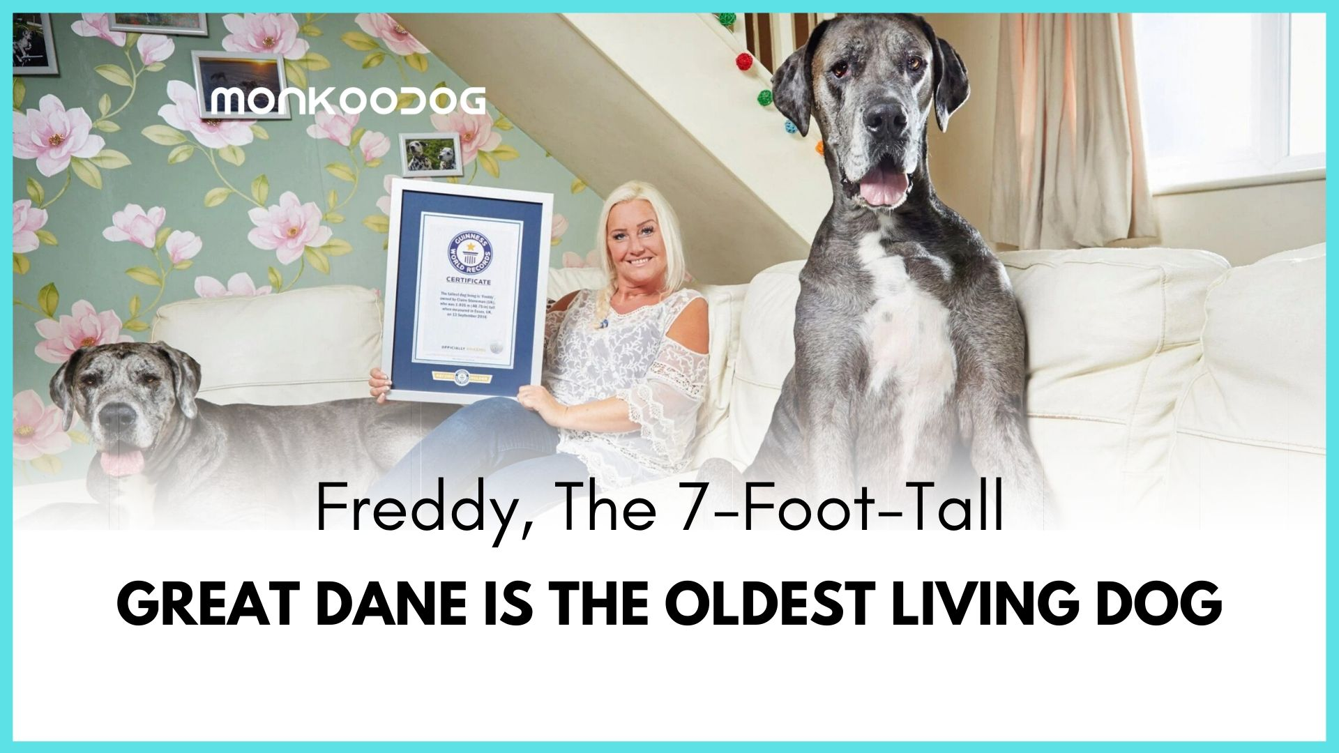 Freddy, the tallest dog is the oldest living dog in the world