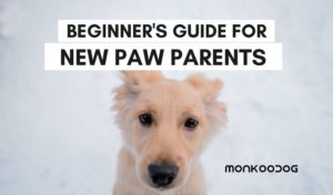 beginner's guide for a new dog parent