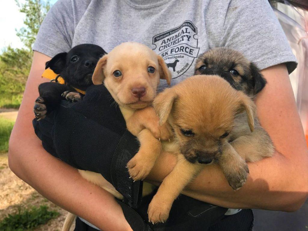Online Puppy Adoption Scam