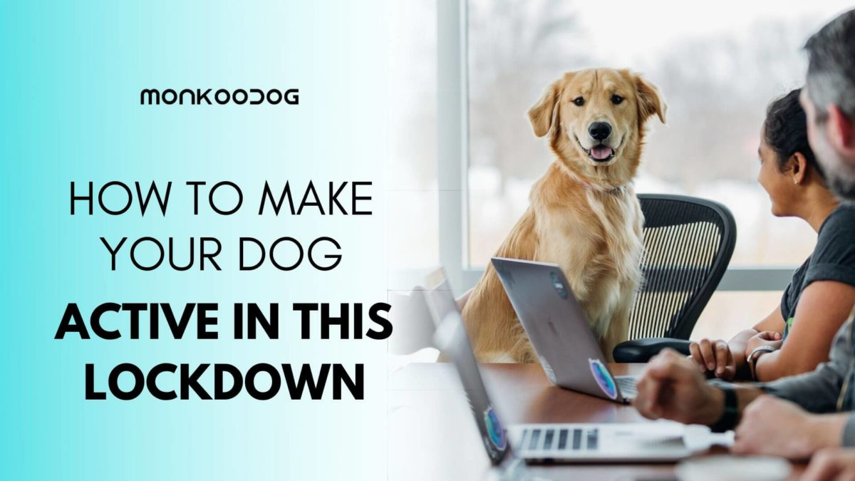 Engage Your Dog in Some Fun This Lockdown!