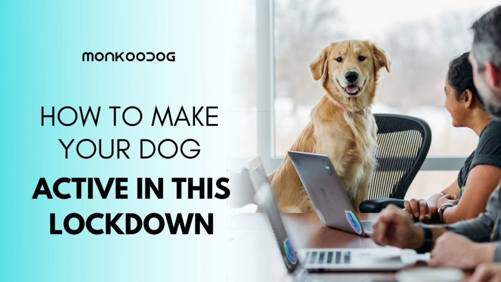 8 Fun Activities to Do With Your Pet In Lockdown.