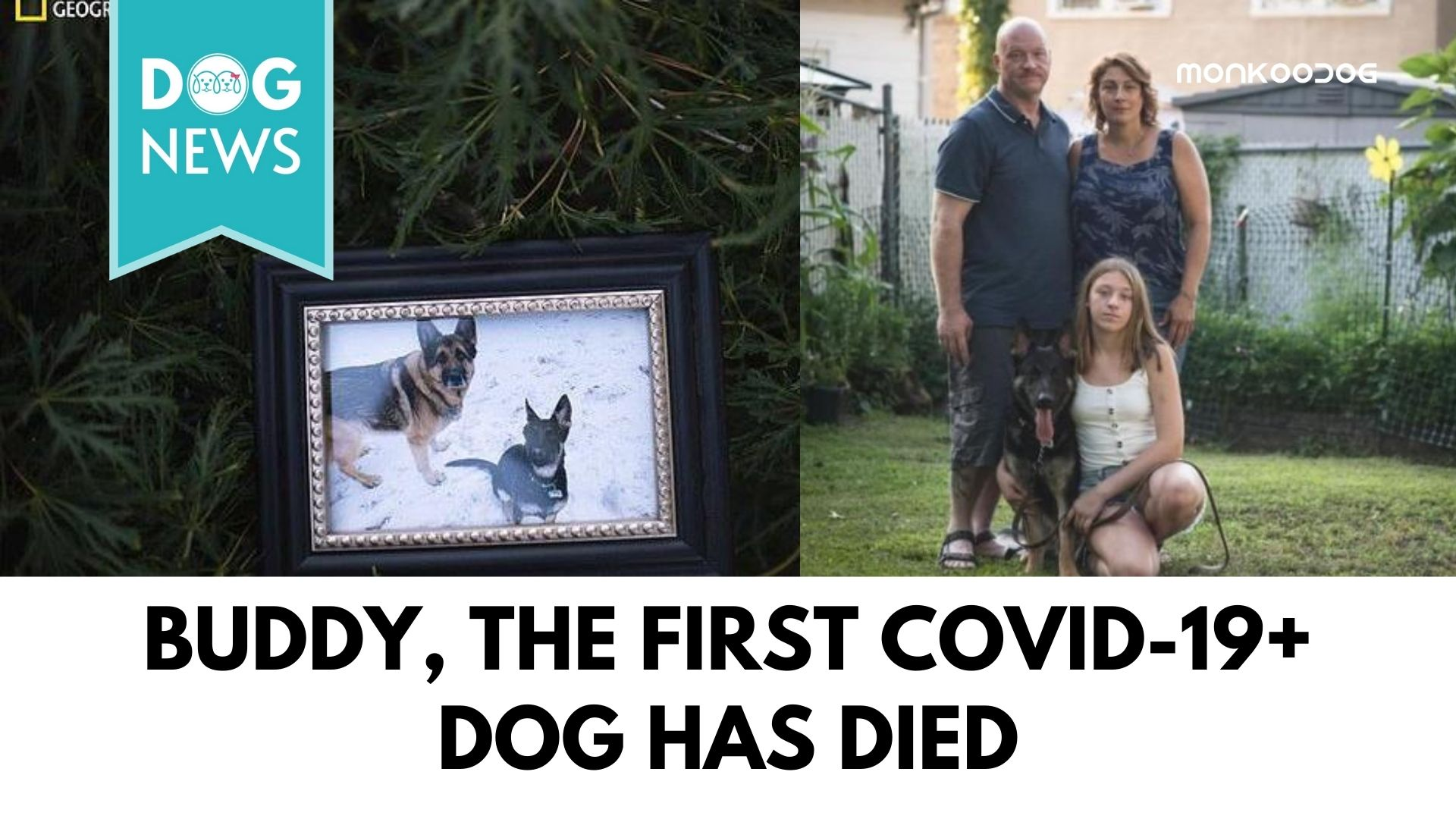 Buddy, the First COVID-19 Positive Dog Passes Away
