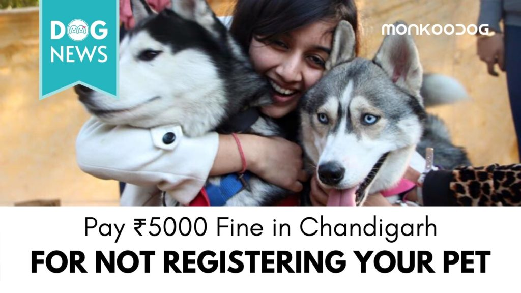 Chandigarh Residents Rush to Register Dogs Amidst the New Reformed Pet Law and Order in the City