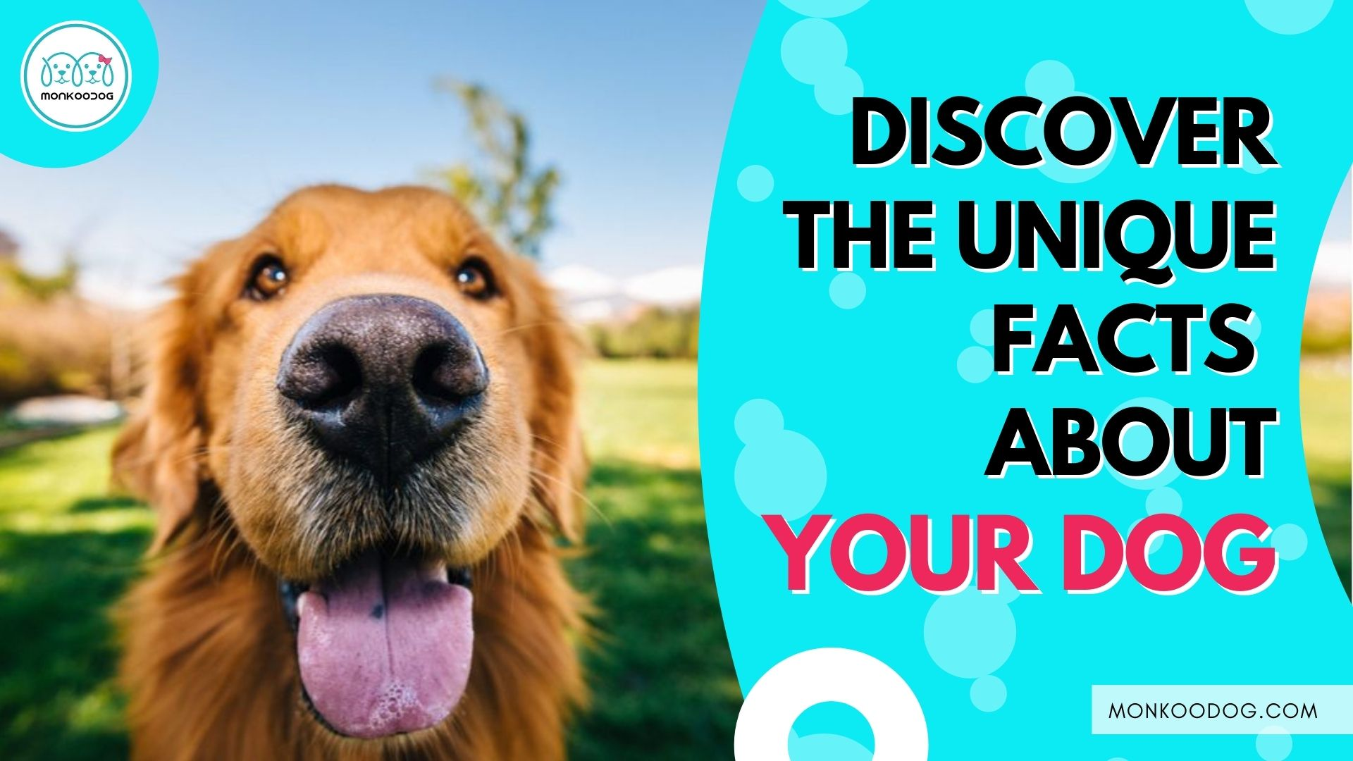 Fun Facts About Dogs You Never Know