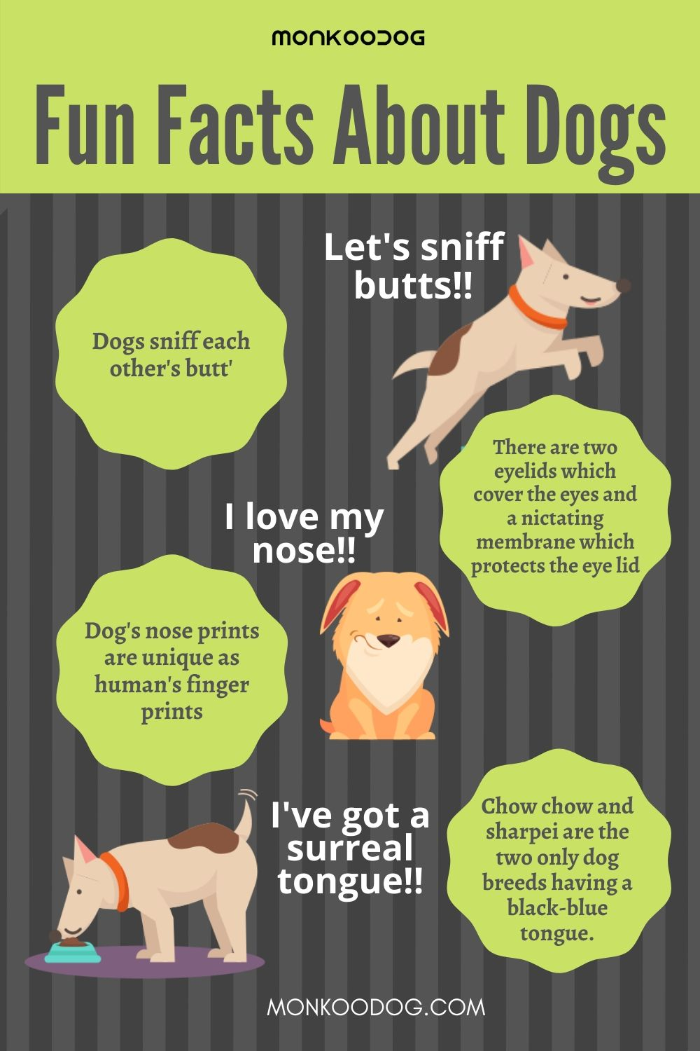 FUN FACTS ABOUT DOGS YOU NEVER KNEW