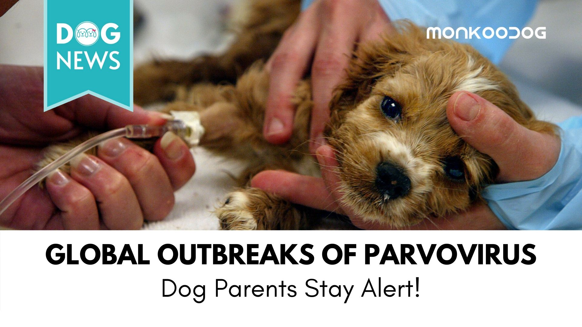 Global outbreaks of parvovirus - Dog parents stay alert