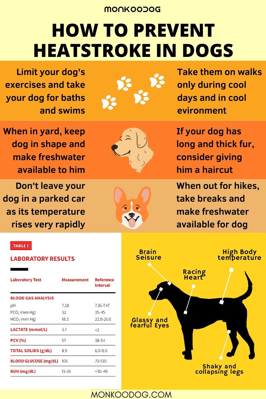 HOW TO PREVENT HEATSTROKE IN DOGS