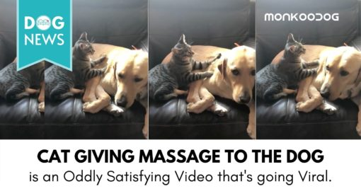 Hilarious video of a Cat Giving Massage to Dog goes viral amidst the Covid19 Pandemonium
