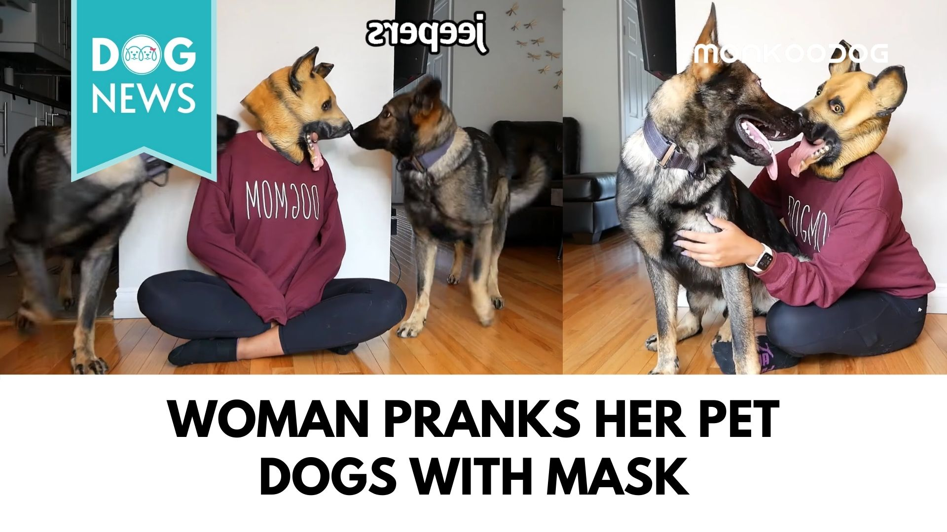 Hilarious video of a woman pranking her German Shepherds goes viral.