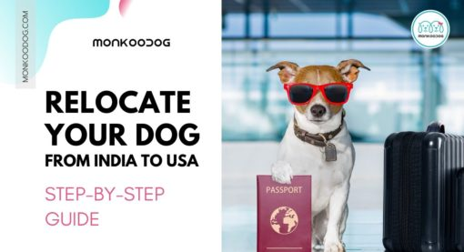 How to Relocate your dog from India to the USA: Step by Step Guide with Costs