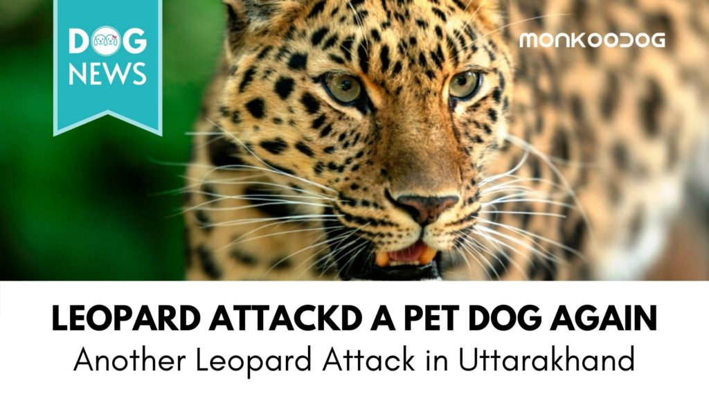 Leopard entered a house in Uttarakhand, grabbed the pet dog and ran away. Incident caught on CCTV.