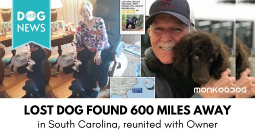 Lost pet dog from South California found 600 miles away finally reunites with owner