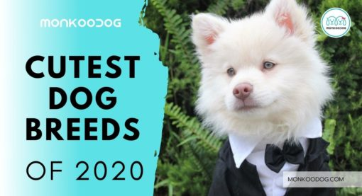 Meet the Cutest Dog Breeds in the World 2020