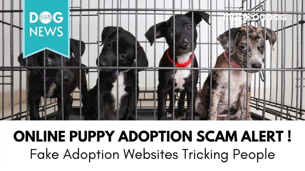 Online Puppy Adoption Scam Growing in the Latest Innovative Crime Style
