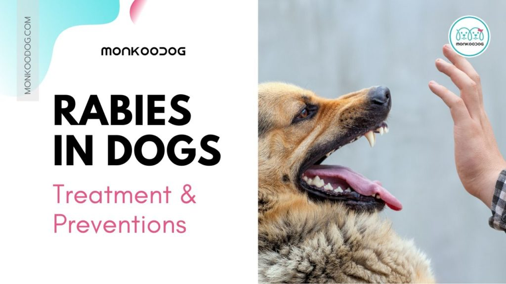Rabies and Dog Bites - Everything you need to know about Rabies Treatment and PreventionRabies and Dog Bites_ Everything you need to know about Rabies Treatment and Prevention