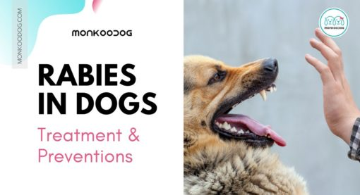 Rabies and Dog Bites: Everything you need to know about Rabies Treatment and Prevention