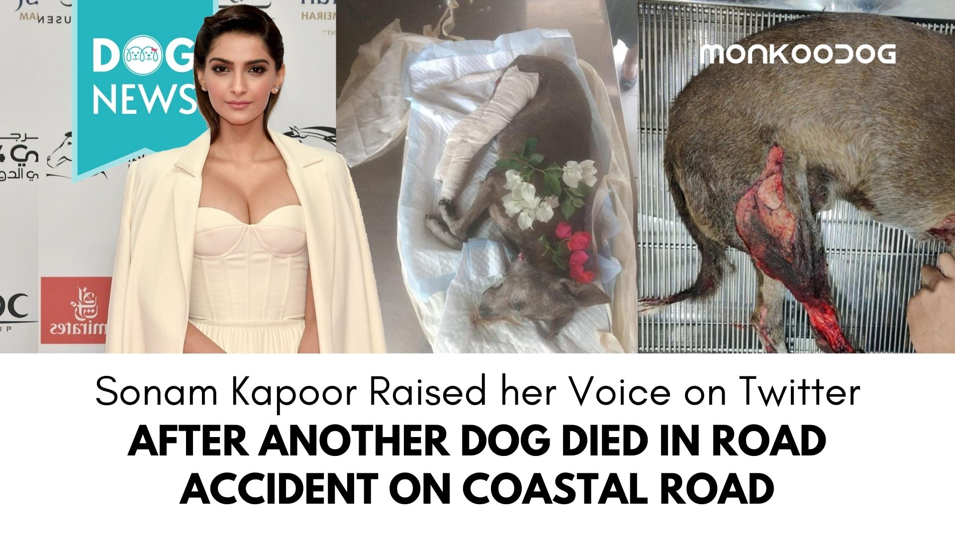 Sonam Kapoor Voices her Concern About the Harms Caused to Stray Dogs due to Coastal Road Construction in Mumbai