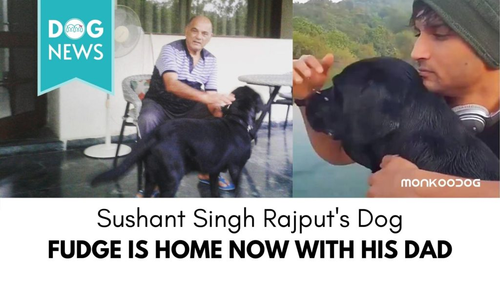 Sushant Singh Rajput's Sister post Photos of his Dog and Dad one month after the Actor's Alleged Suicide