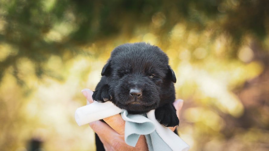 Things to keep in mind before adopting a dog