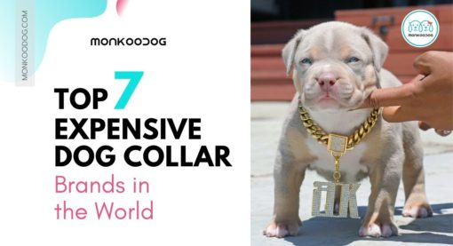 Dog Collar: Top 7 Most Expensive Dog Collar Brands in the World