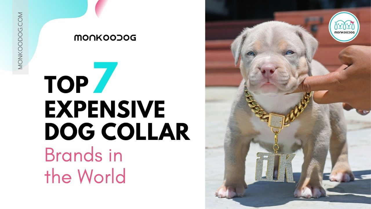 Top 7 Expensive Dog Collar Brands in the World.