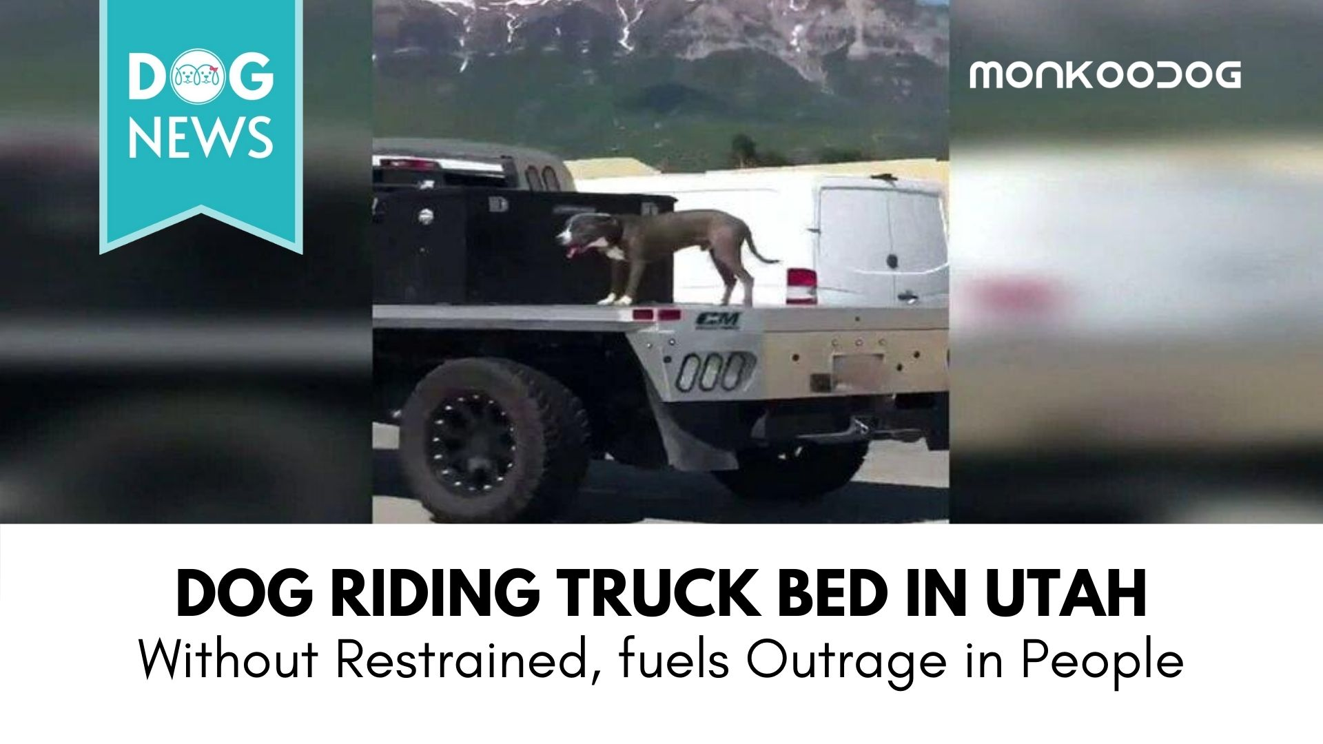Video of a Dog on an Unrestrained Truck Bed Raises Concerns and Calls for Action.