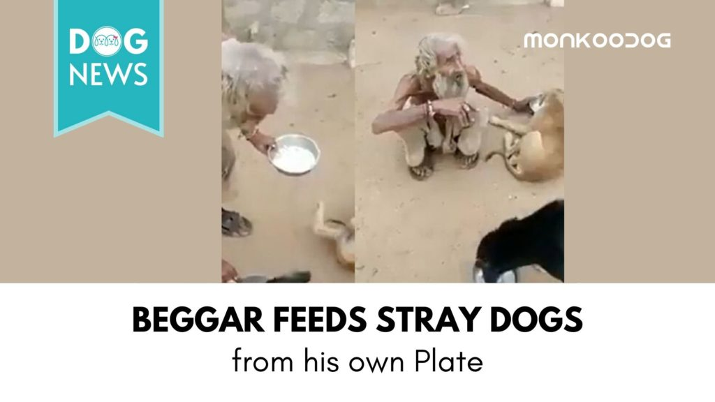 Viral Video: An Indian Beggar Feeds Stray Dogs From His Plate