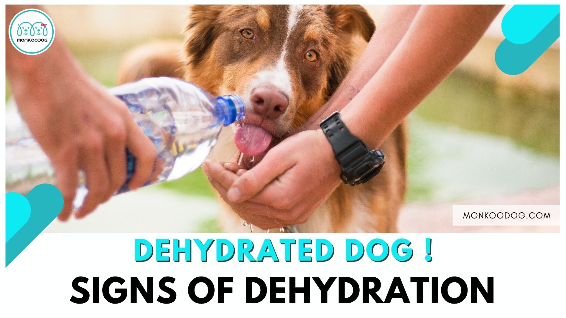 10 Signs To Recognize Dehydration In Dogs