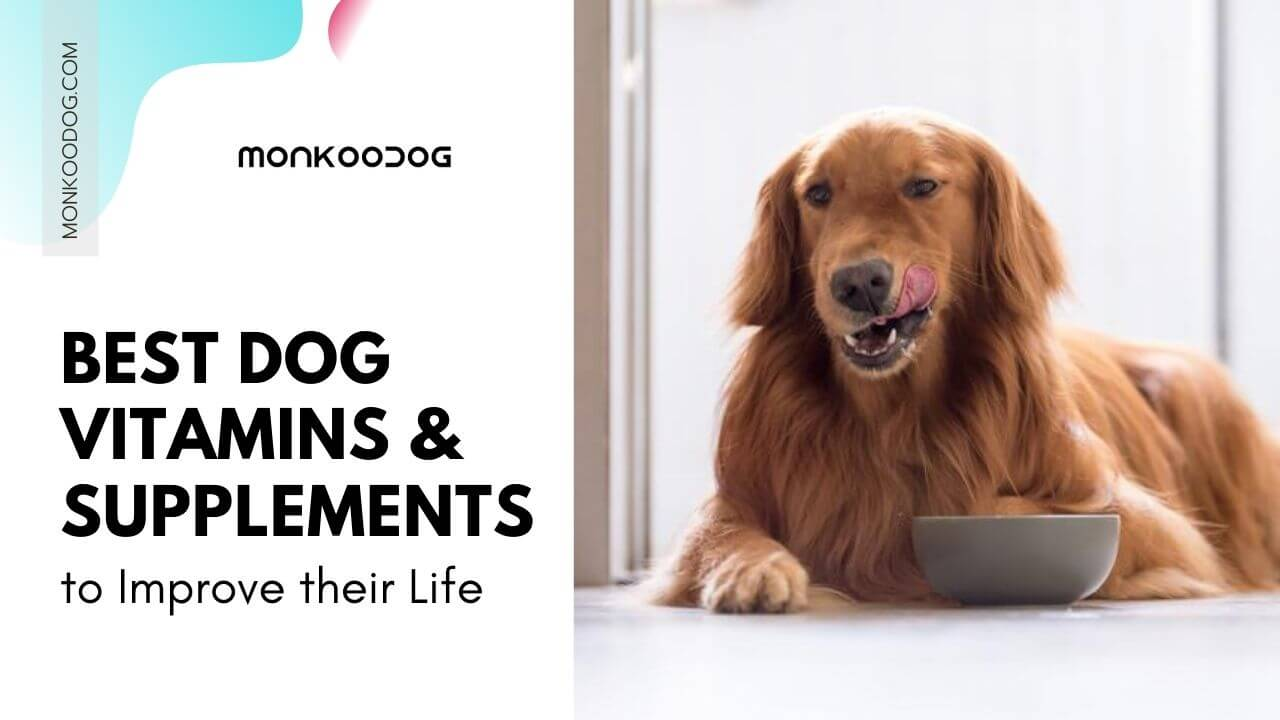 Do Not Miss out on these Supplements for Puppies.