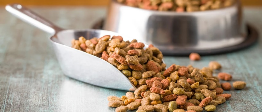 'Does dog food contains gluten? Picture from ThePetsNeedThat.com'