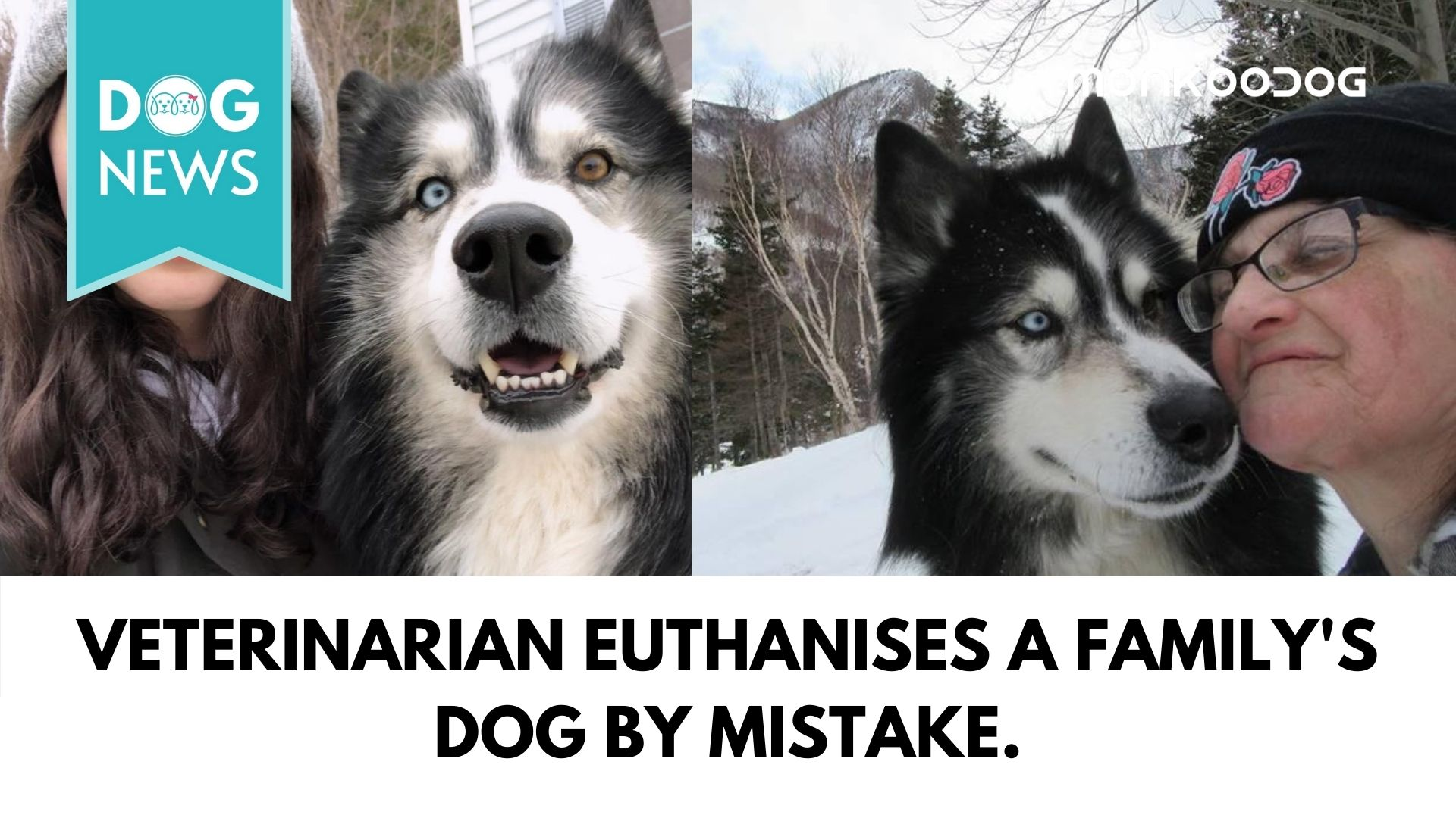 Eight years old Husky mistakenly euthanised by a veterinary clinic in Cape Breton.