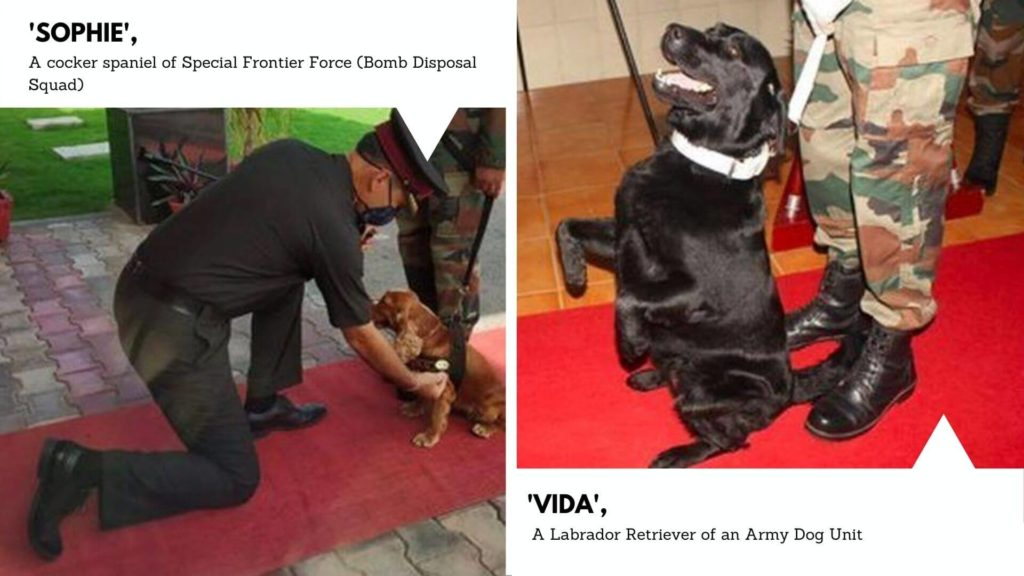 Indian Prime Minister acknowledges canine soldiers of the Indian Army for their contribution towards saving lives via the latest Mann Ki Baat episode.