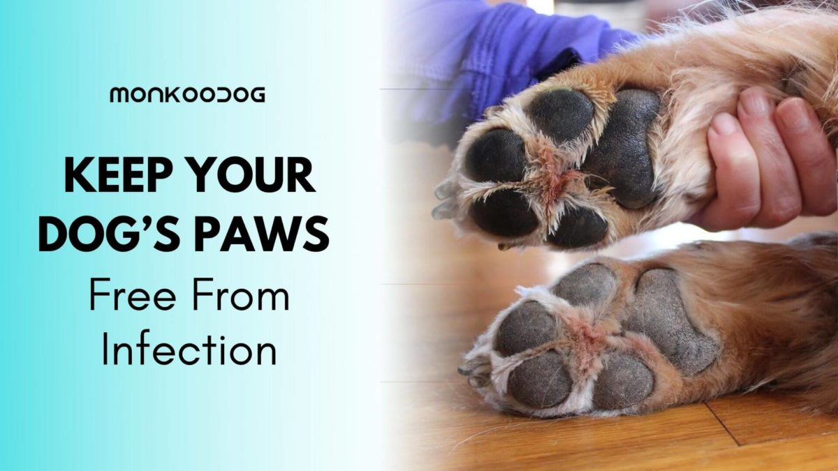 Keeping Dog's Paws Free From Infection – Everything You Need to Know