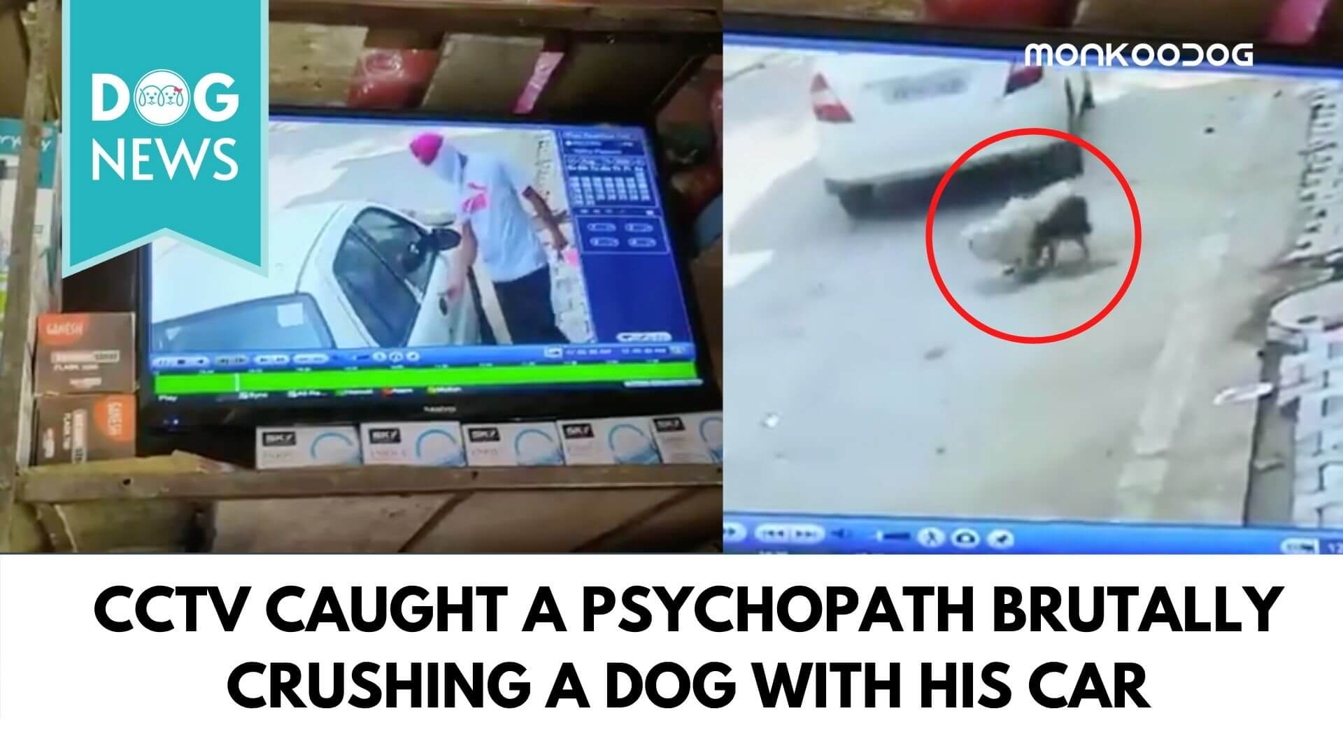 Man Caught on CCTV Brutally Crushing a Stray Dog with his Car, Maneka Gandhi Demands Immediate Arrest