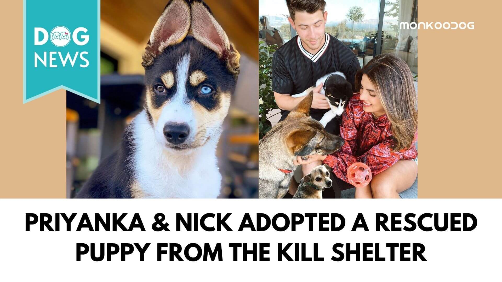 Priyanka & Nick Adopted a Rescued puppy from the kill shelter
