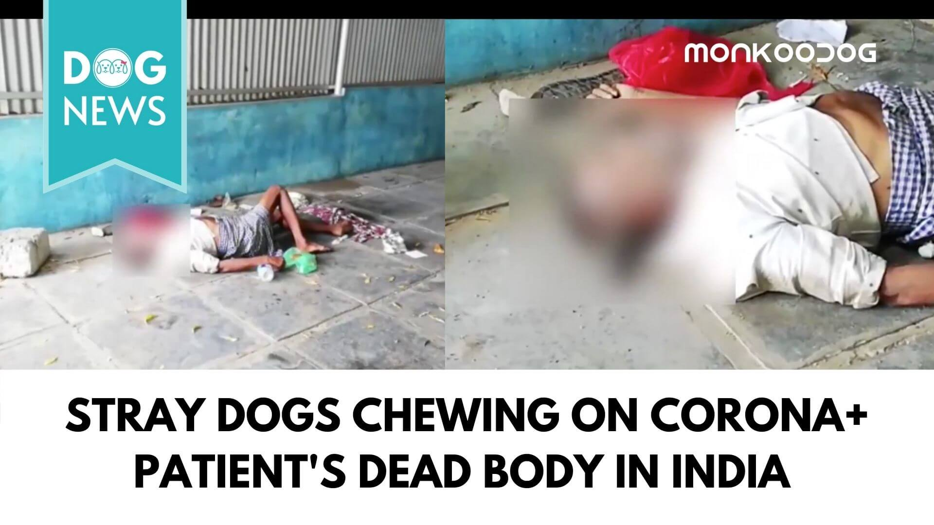 Shocking Viral Video of Dogs Chewing on a Dead Corona Infected Body within the hospital premise Shakes the Nation.
