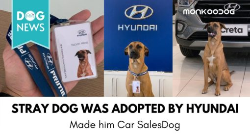 A Stray Dog got adopted by Hyundai Showroom in Brazil. Made him Car Sales Dog