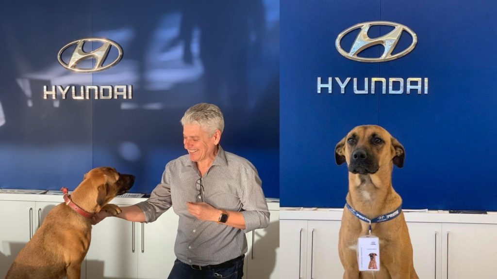 Stray Dog was adopted by Hyundai Showroom in Brazil. Made him Car SalesDog