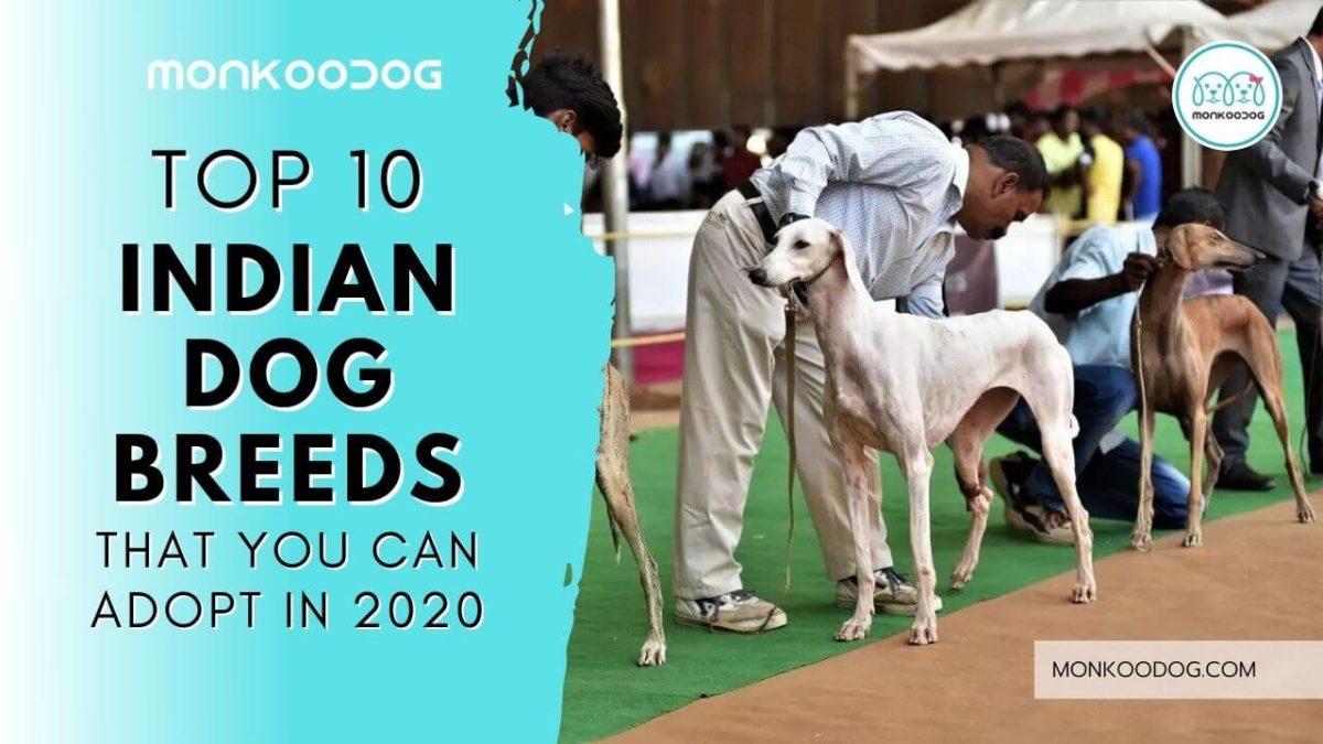 Top 10 Indian Dog Breeds to Adopt