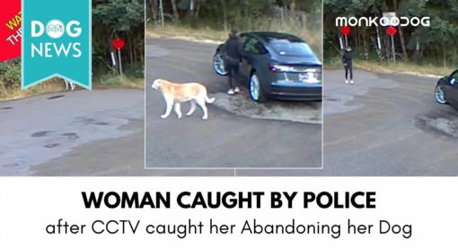 Vancouver Women caught by Police after CCTV caught her Abandoning Pet Dog