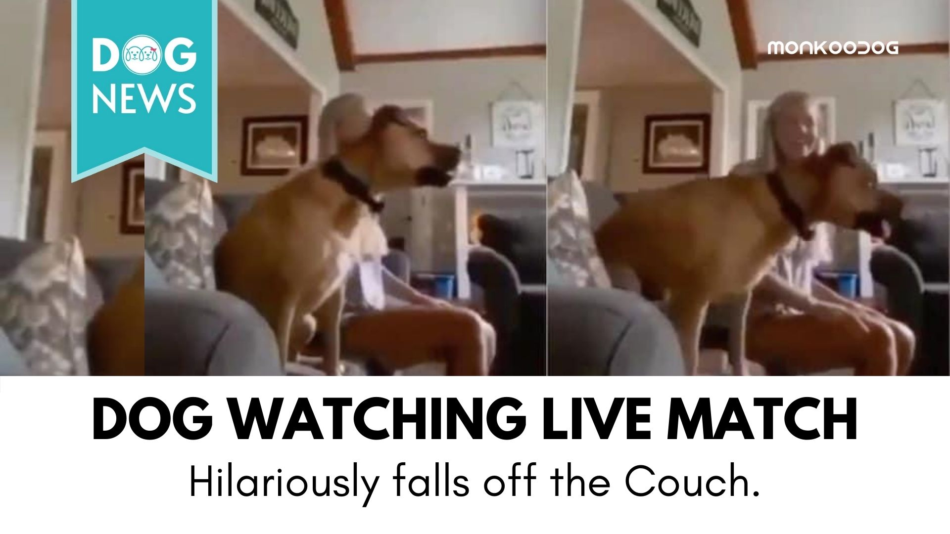 Viral Video of dog watching the match on television is a must-watch for anyone who is yet to have a pet.