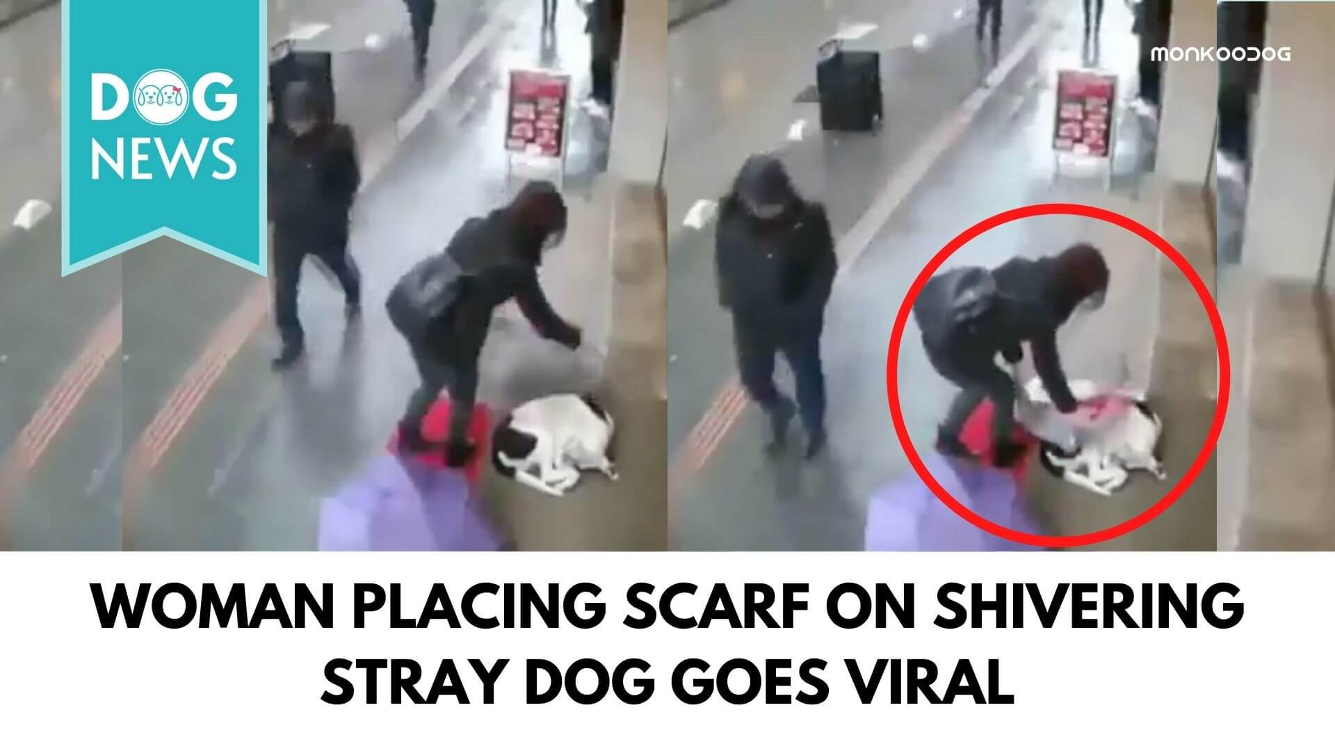 Woman Placing Scarf On Shivering Stray Dog Goes Viral On Social Media