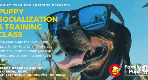Puppy Socialization & Training Class