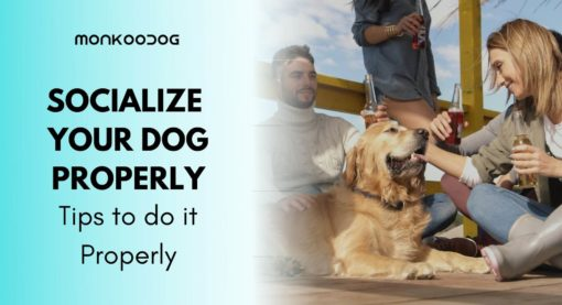 10 Reasons Why Dog Socialization Is Important
