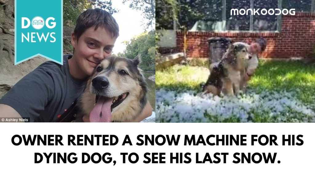 A Dog Owner rented a snow machine to show his dying dog the snow for the Last Time.