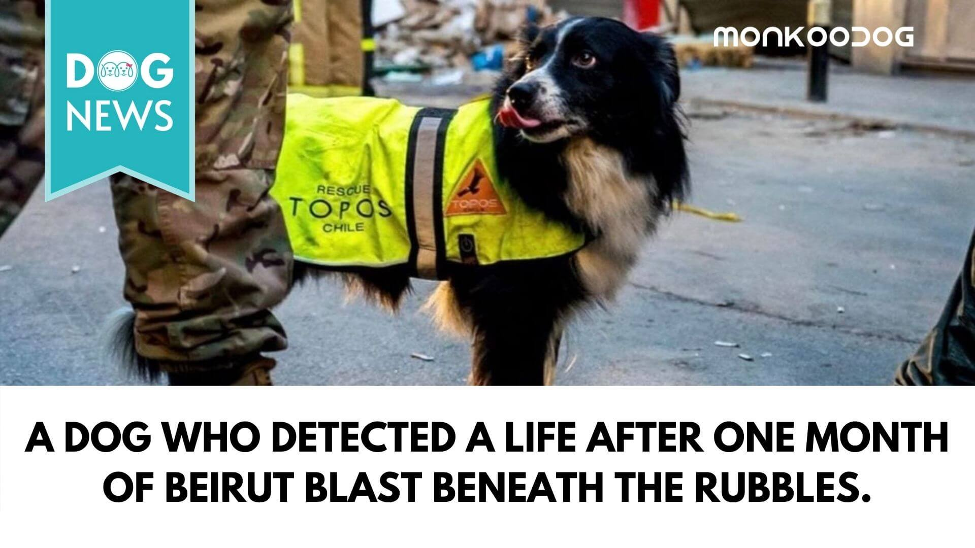 A Dog who detected a life after one month of beirut blast beneath the rubbles.