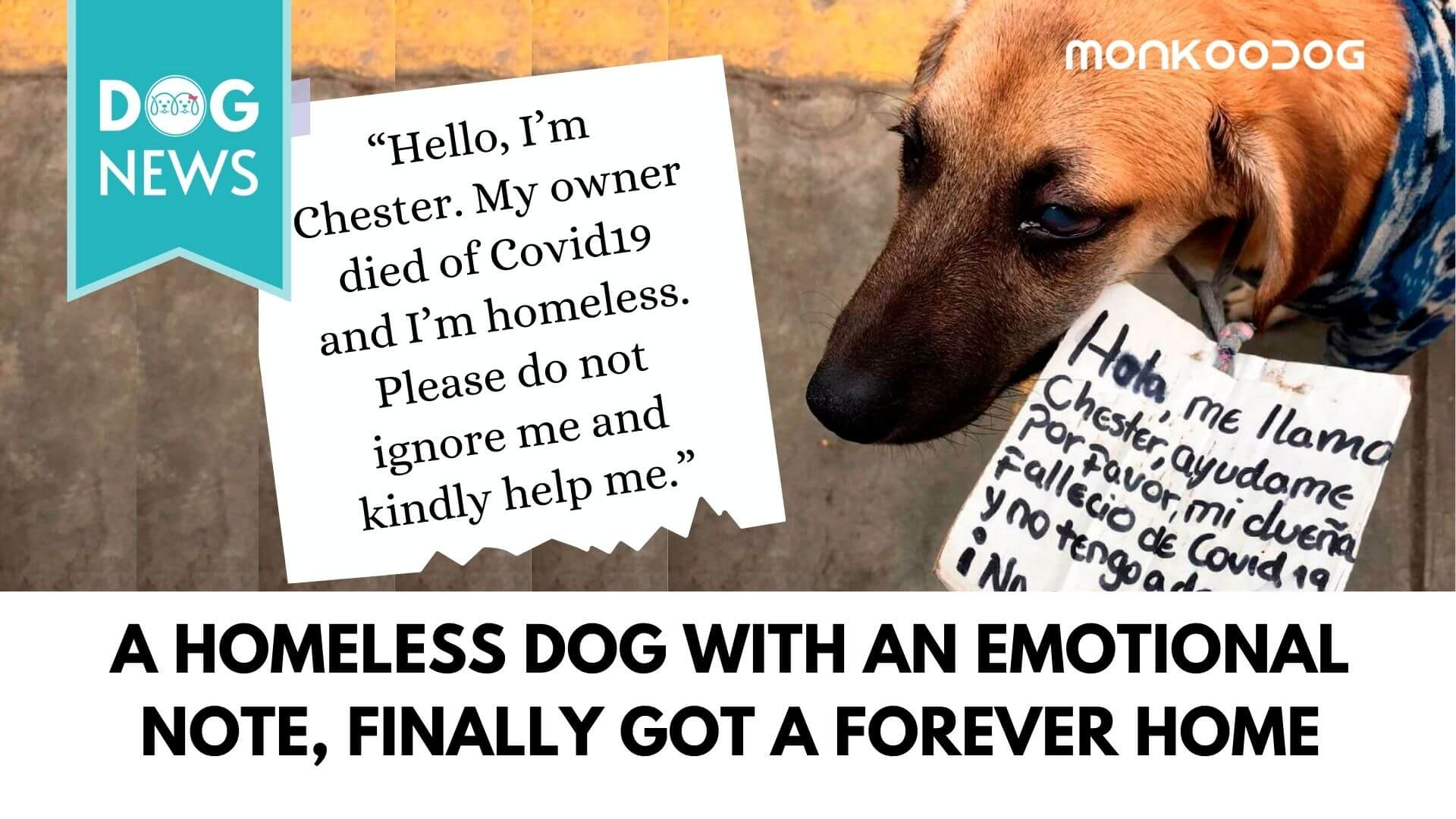 A heartwarming note attached to the collar of a homeless dog fetches him a forever home, finally.
