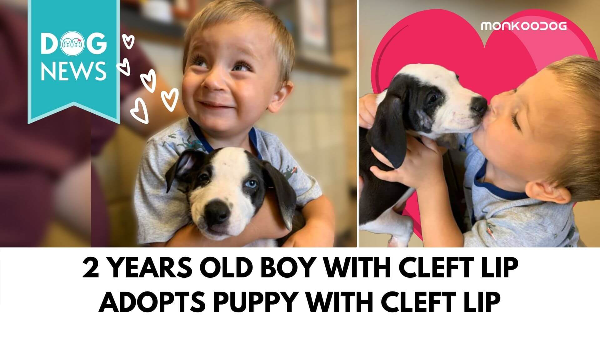 A puppy with cleft lip and a 2 years old boy with cleft lip fell in love with each other