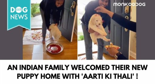 An Indian family welcoming a new puppy home in desi style is the most adorable style